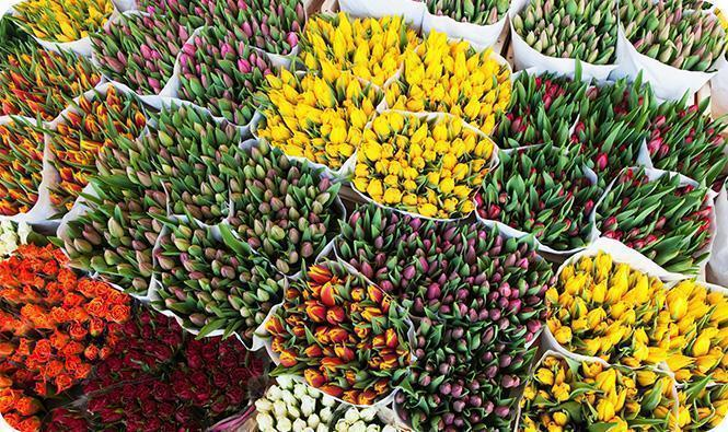 Różnorodne kwiaty