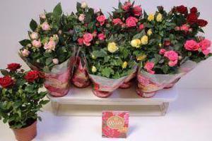 kwiatki-w-donicach-2