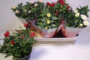 kwiatki-w-donicach-3