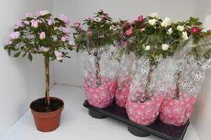kwiatki-w-donicach-4