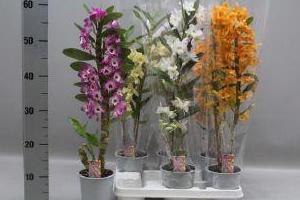 kwiatki-w-donicach-5