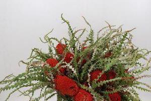 rosliny-doniczkowe-47