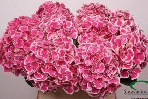 kwiaty cięte 05