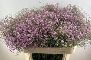 kwiaty cięte 29