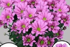 kolorowe-rosliny-ciete-15