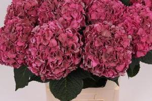 kolorowe-rosliny-ciete-41