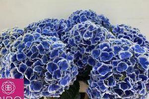 kwiaty cięte 003