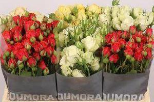 kwiaty cięte 011
