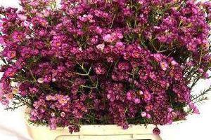 kwiaty cięte 3