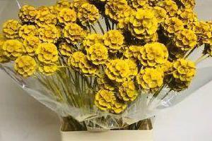 kwiaty 016