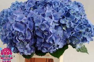 niebieskie bukiety 01