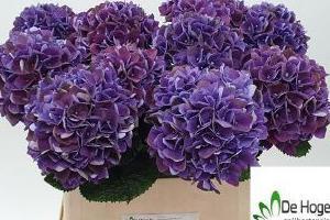 nowe kwiaty cięte 08