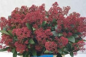 kwiaty cięte 15